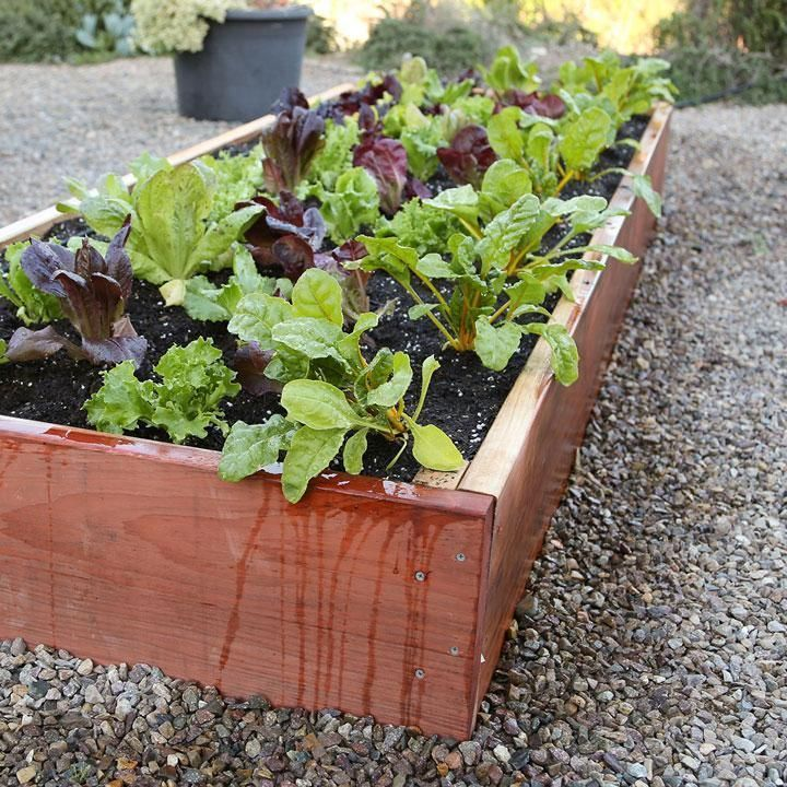 Build A Raised Bed Garden Lowes Partnership Class