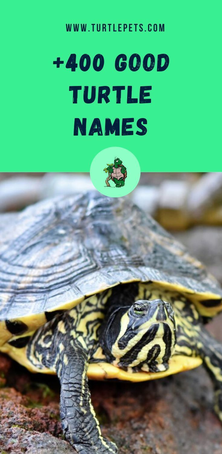 Turtle Names 400 Names For Pet Turtles And Tortoises Turtlepets In 2020 Turtle Names Pet Turtle Pet Names