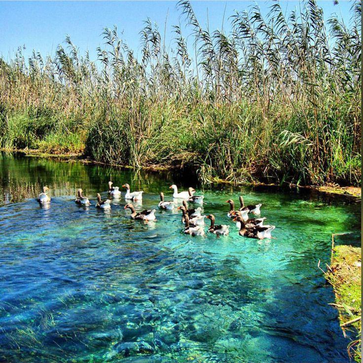 Akyaka'nın Azmak nehrinde rutin bir gün☺️ Günaydın!  www.kucukoteller.com.tr/akyaka-otelleri.html