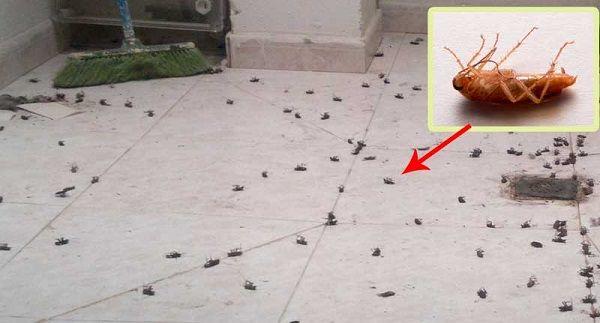 Débarrassez-vous définitivement des blattes et des cafards grâce à ce remède très efficace !