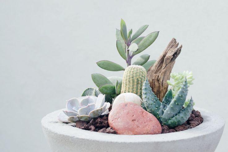 #concrete #concreteplanter #succulents #cacti