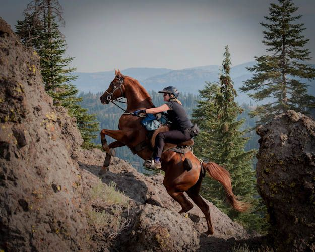 52 Best Endurance Riding Images On Pinterest Horse