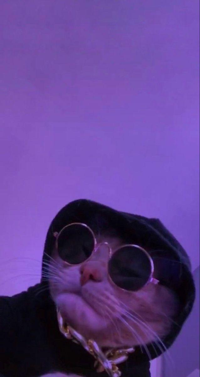 purple cat cat wallpaper cat aesthetic purple