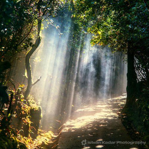 landscapelifescape:  Escallonia Cloud Forest Trail, Alajuela, Costa Rica (by fesign) *wow!*