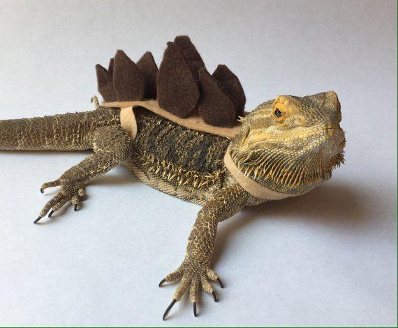 Stegosaurus Bearded Dragon Lizard Costume Bearded Dragon