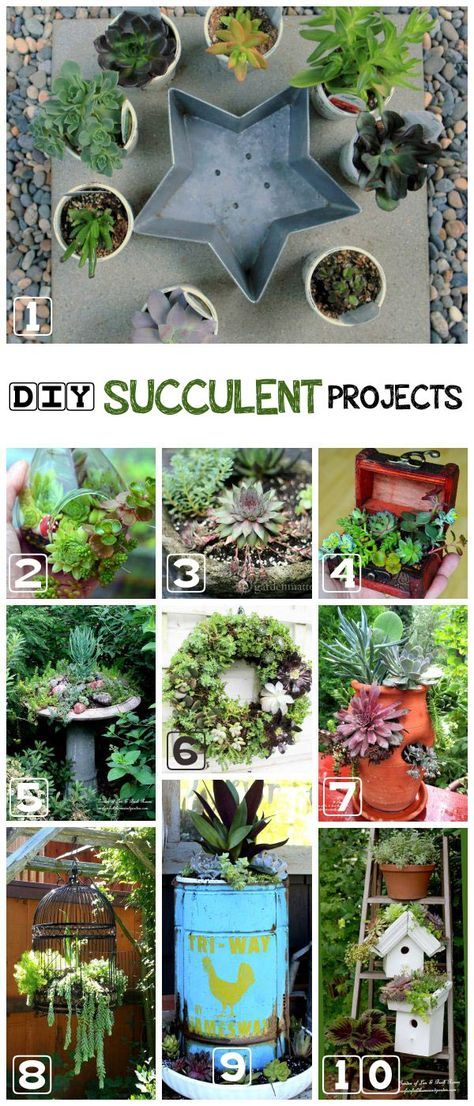 Succulents are living works of art! These drought-tolerant plants are extraordinarily versitile due to their shallow roots and minimal watering needs. Come grab ideas for planting them in any container. Projects here include a treasure chest, birdhouse greenroof, star-shaped cake pan, bird bath, chicken waterer, and more.