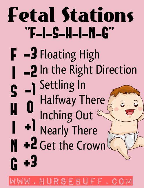 fetal stations nursing mnemonics