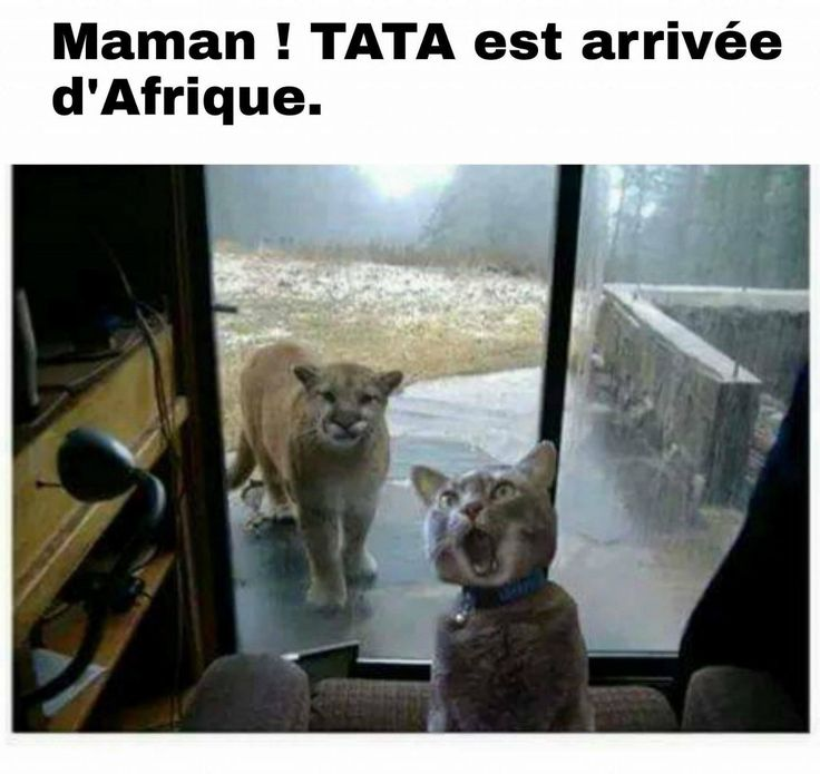 Maman ! Tata est arrivée d'Afrique