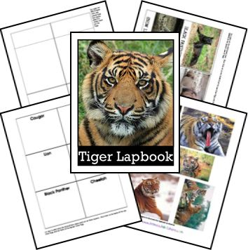 Tiger Unit Study and Lapbook