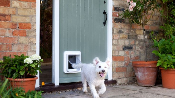 People who want to know everything about their pets have a powerful new tool.SureFlap, based in the UK, already makes a line of products connected to pets' implanted microchips. Now it's putting out an app-enabled pet door for cats and small dogs.It should be pretty straightforward to start tracking