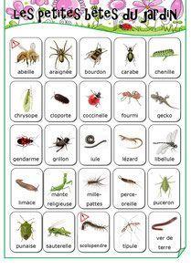 Les petites bêtes du jardin - Fiches de préparations (cycle1-cycle 2-CLIS)