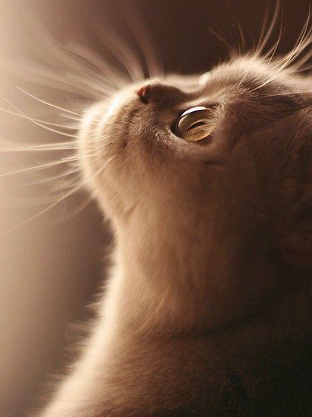 Kitty, kitty, kitty ... ♥