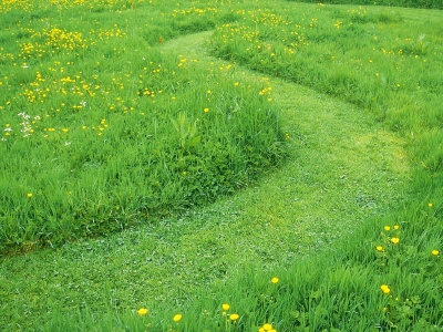 17 best images about wild flower meadows on pinterest for Wild grass landscaping