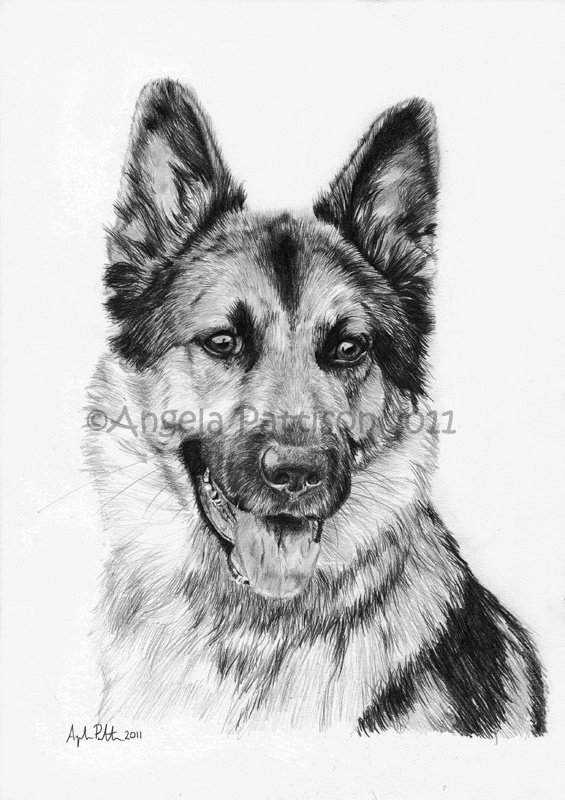 22 best images about pencil drawings of dogs on pinterest