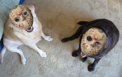 17 Best Images About Scary Dogs And Cats On Pinterest