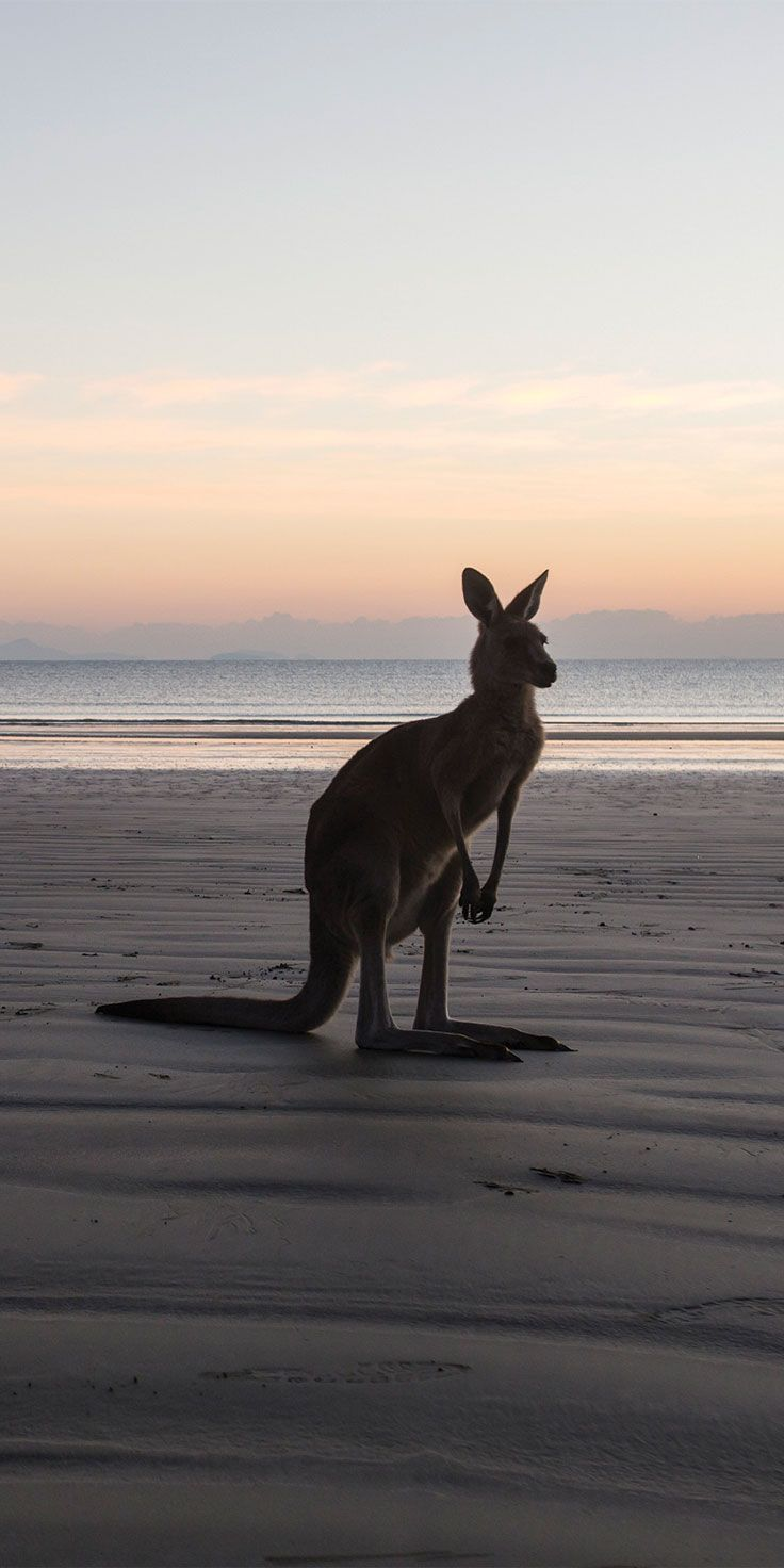 Dusk at the beach in Cape Hillsborough National Park - by Brooke Miles & @visitqueensland