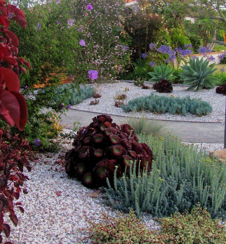 1000 Images About Xeriscape Southern California On