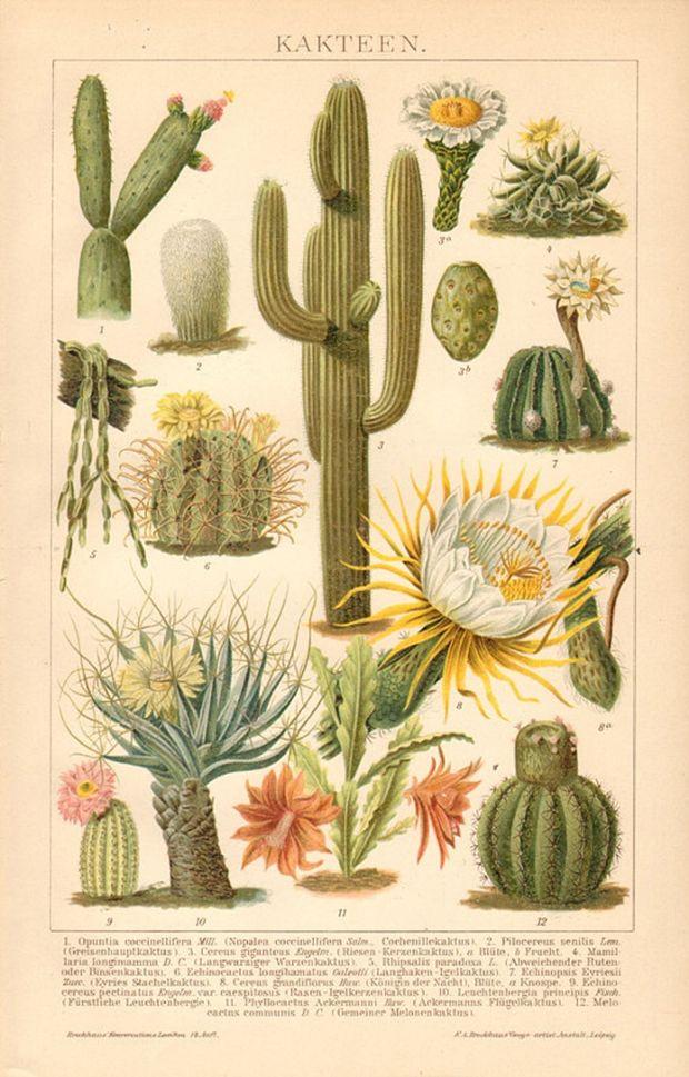 ilustraciones-botanicas-naturaleza-arte-y-ciencia-04