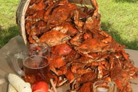 Bushels of Maryland crabs because nicks from the eastern shore! #caperesortswedding #nicolemillerbridal
