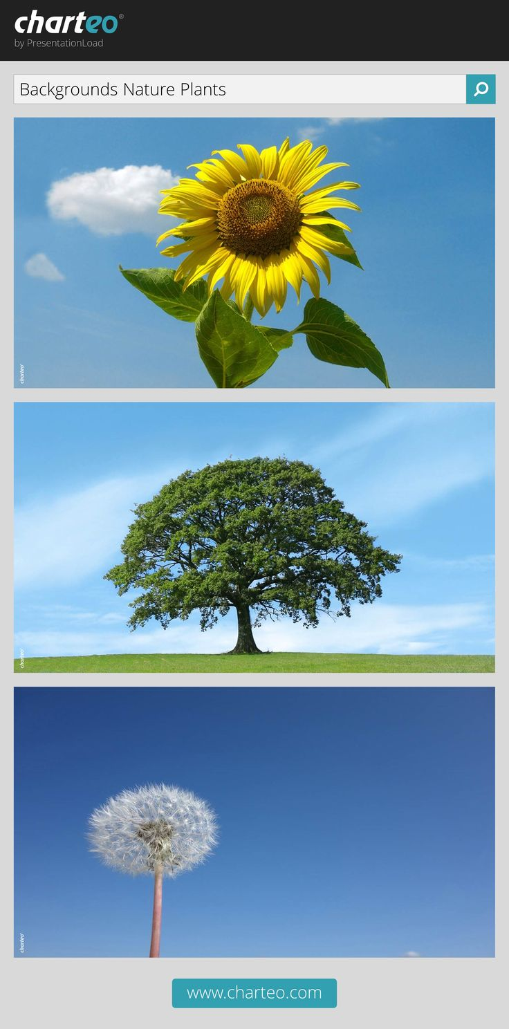 Nature backgrounds give your presentation a vivid look and are useful as title slide or slide for quotations.