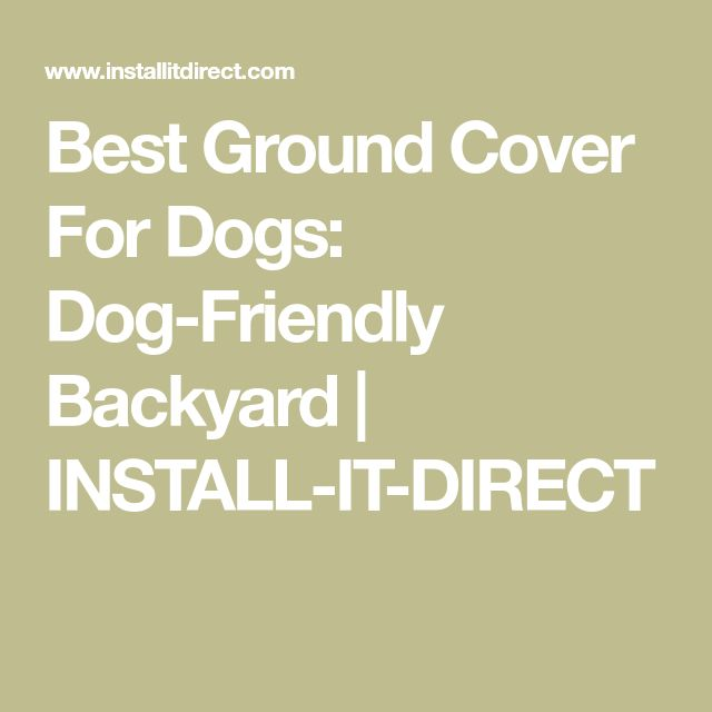 Best Ground Cover For Dogs: Dog-Friendly Backyard | INSTALL-IT-DIRECT