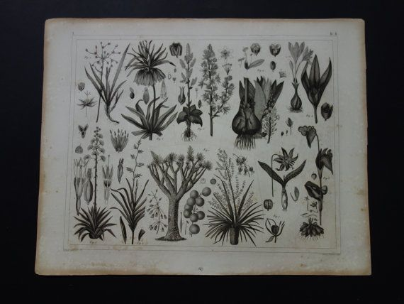 old botanical print 1849 original antique set by DecorativePrints