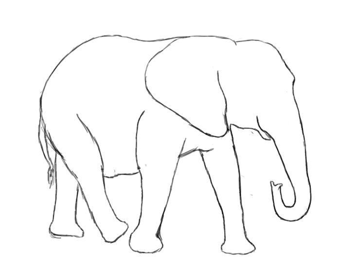 elephant  elefant malen elefant zeichnung elefanten