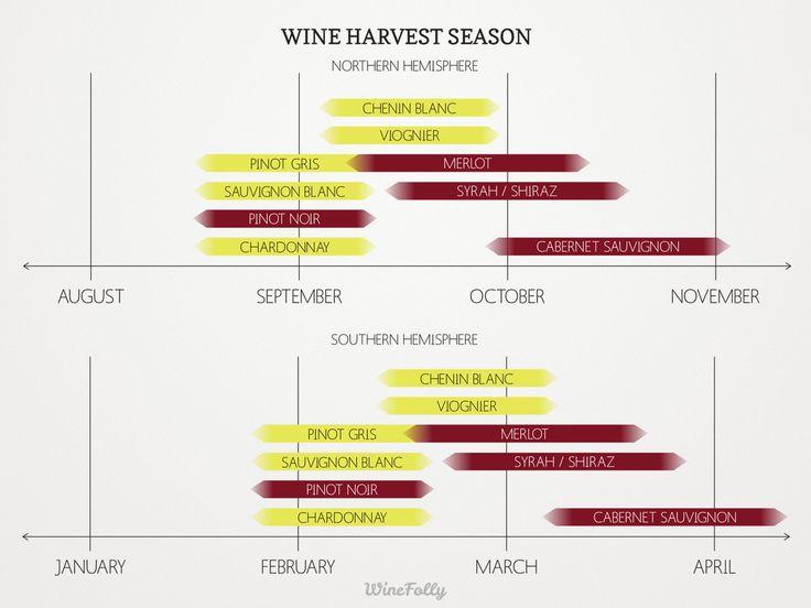 "[infographic] ""Wine Harvest Season on Northern & Southern Hemisphere"" Apr-2014 by Winefolly.com"