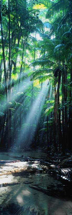 Enlightened - Fraser Island - Queensland