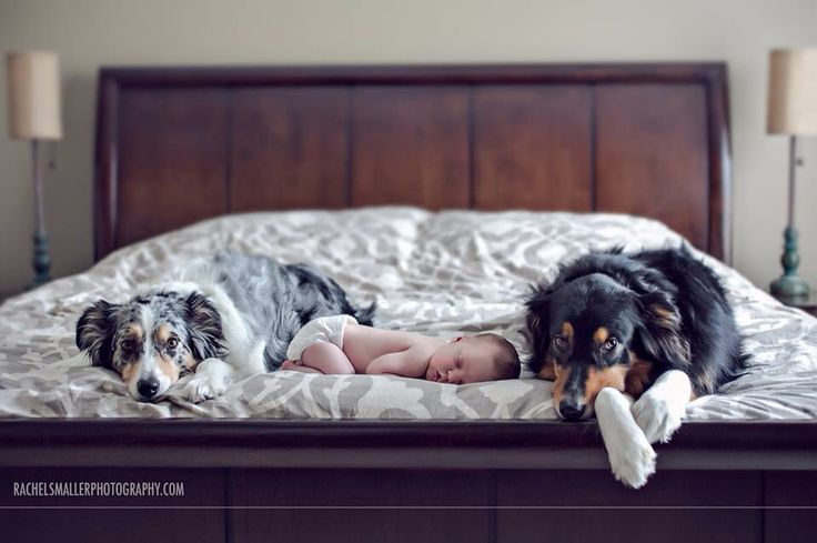 Newborn Photography, newborn with dogs, newborn lifestyle
