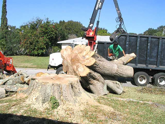 Tree Removal Service – Ensure Safety and Accuracy #treeremoval #services
