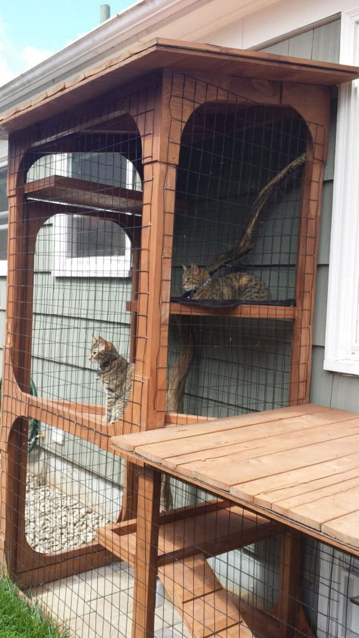 The cat's meow: Check out cat patio styles on the Catio Tour (photos, video) | OregonLive.com