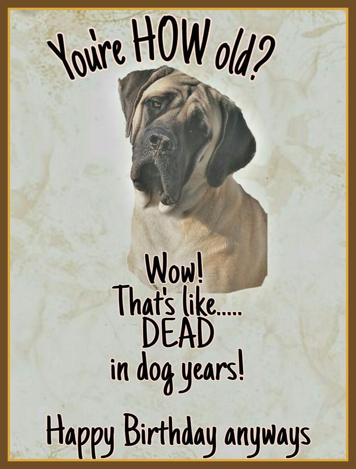 Mastiff birthday card #mastiff #englishmastiff #bigdog #gentlegiant #mastiff_happy #dog #birthday