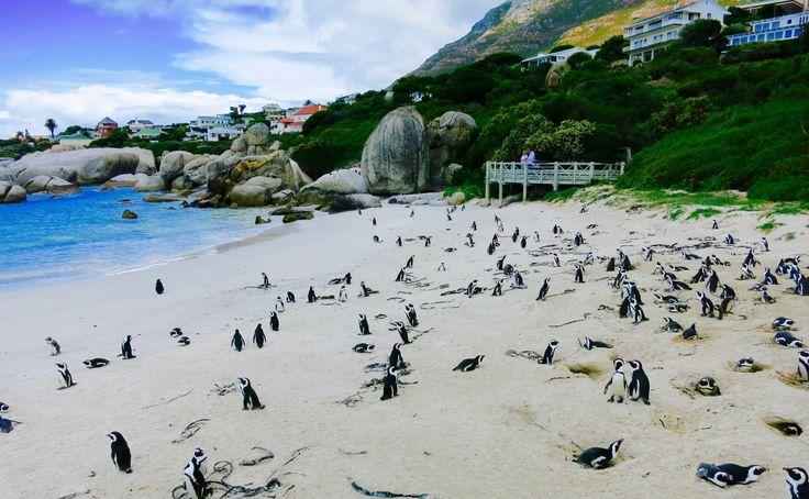 DeineSüdafrika Rundreise in 17 Tagen In dieser Schnellübersicht möchten wir dir ein paar tolle Tipps für deine Rundreise in Südafrika geben. Von Kapstadt über die Garden Route bis nach Port Elizabeth und dem Addo Elephant Park. Es gibt einfach ein paar Highlights, die solltest du auf deiner Südafrika Rundreise nicht verpassen. Südafrika ist auf jeden