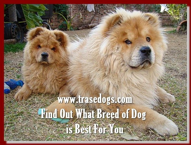 Talking About Dog Dogs Funny Dogs Big Dogs