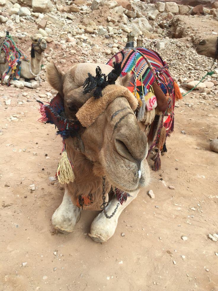 Camel ride at Petra