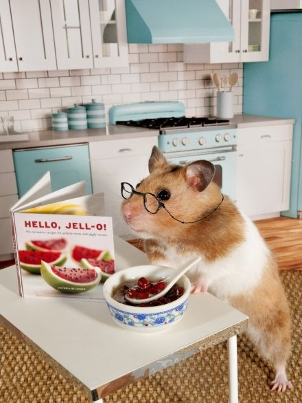 Zoey the Hamster prepares to make a recipe from my new book Hello Jell-O!