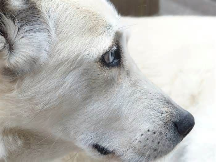 Dog's Death Sparks $50K Malpractice Suit Against Downers Grove Vet Clinic DOWNERS GROVE, IL — A woman has filed a $50,000 malpractice lawsuit against Arboretum View Animal Hospital in Downers Grove alleging that they gave her false information and improperly treated her dog. Karen Miles of Cook County first took her dog to ...