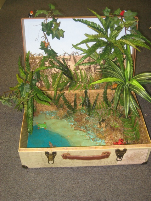 Science: Rainforest Ecosystem Diorama | dioramas ...
