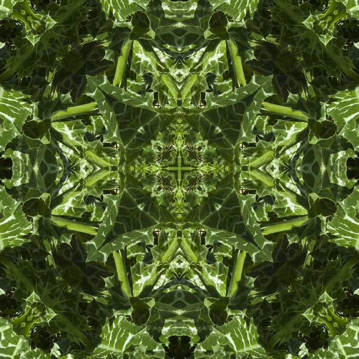 Thistle Octagon  http://julianventer.com/