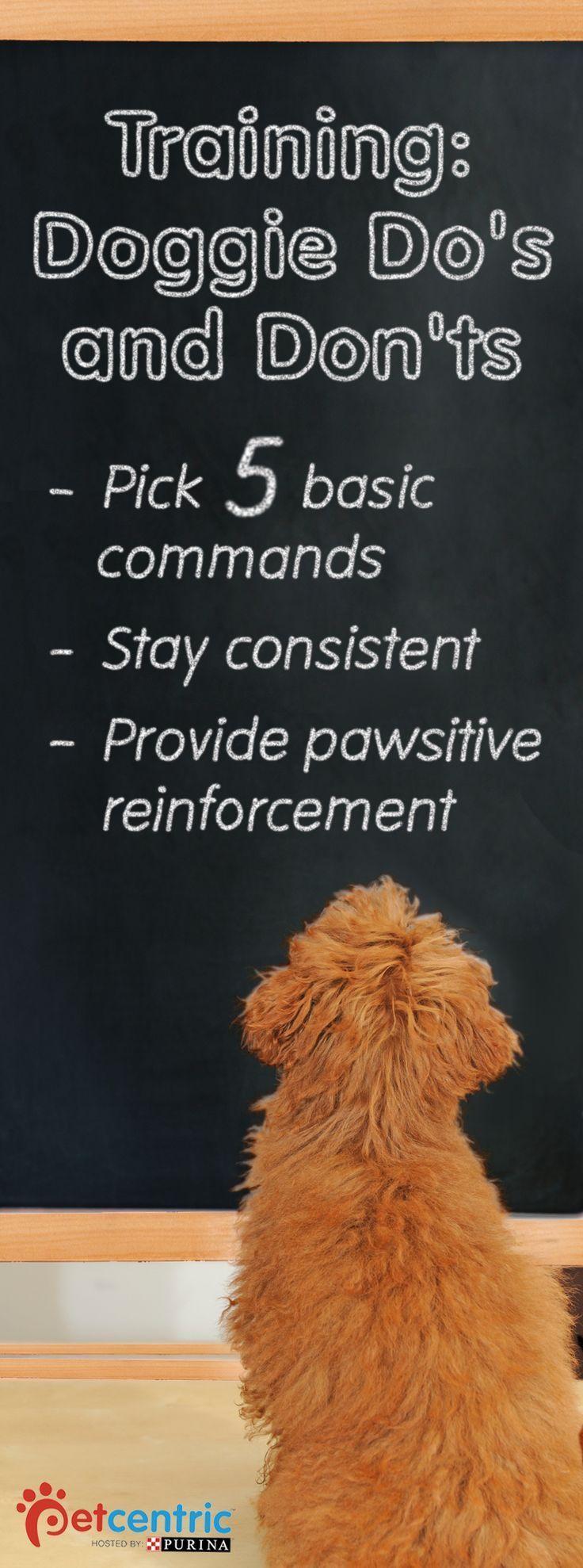 best dog training tips images on pinterest dog training dog