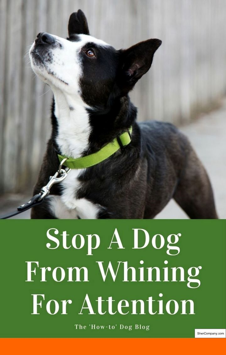 How To Train Dog To Stop Barking At Strangers And How To Train