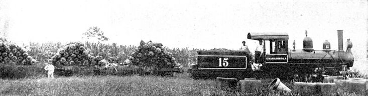 Panama - UNITED FRUIT COMPANY TRAIN - narrow gauge railroad carries no freight except bananas