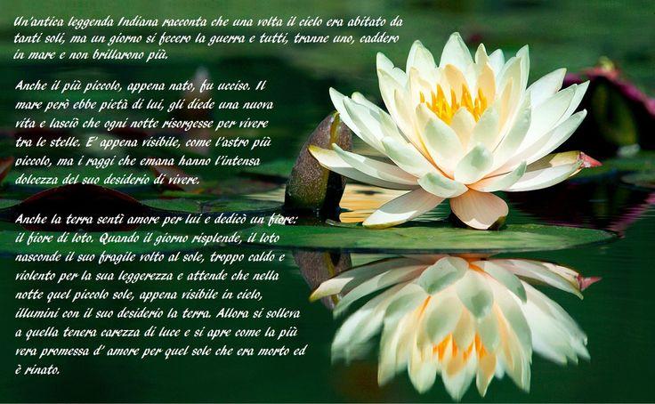 I significati del fiore di loto sono soprattutto legati al buddismo. È considerato il fiore dell'illuminazione e della resurrezione, così come della purezza e della crescita spirituale.