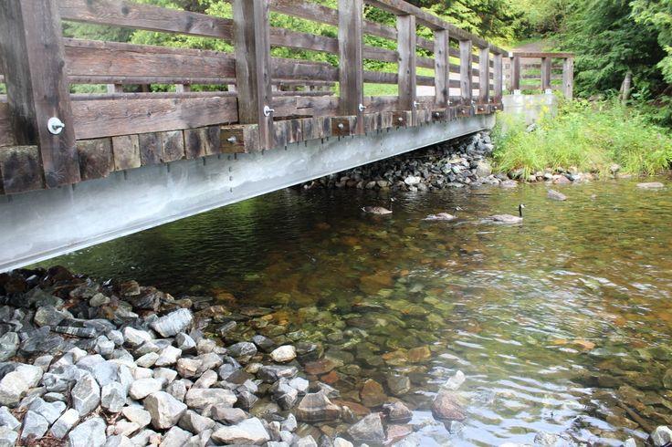 Bernaches sous le pont