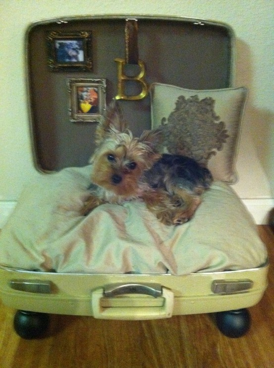 Suitcase Repurposed into a Travel Dog Bed.