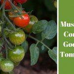 Is Mushroom Compost Good For Tomatoes?