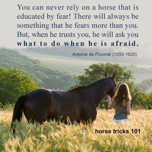 You can never rely on a horse that is educated by fear! There will always be something that he fears more than you. But, when he trusts you, he will ask you what to do when he is afraid.