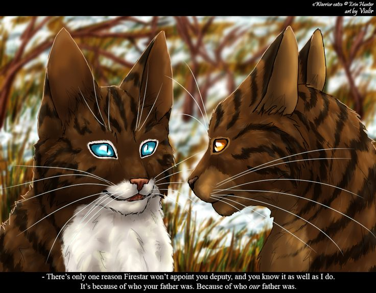 hawkfrost and brambleclaw hawkfrost really is a soldier