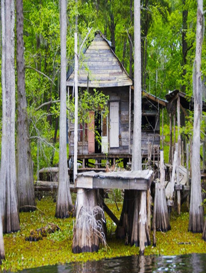 Cypress Trees & Swamp Shack You sure would need a Bat ...